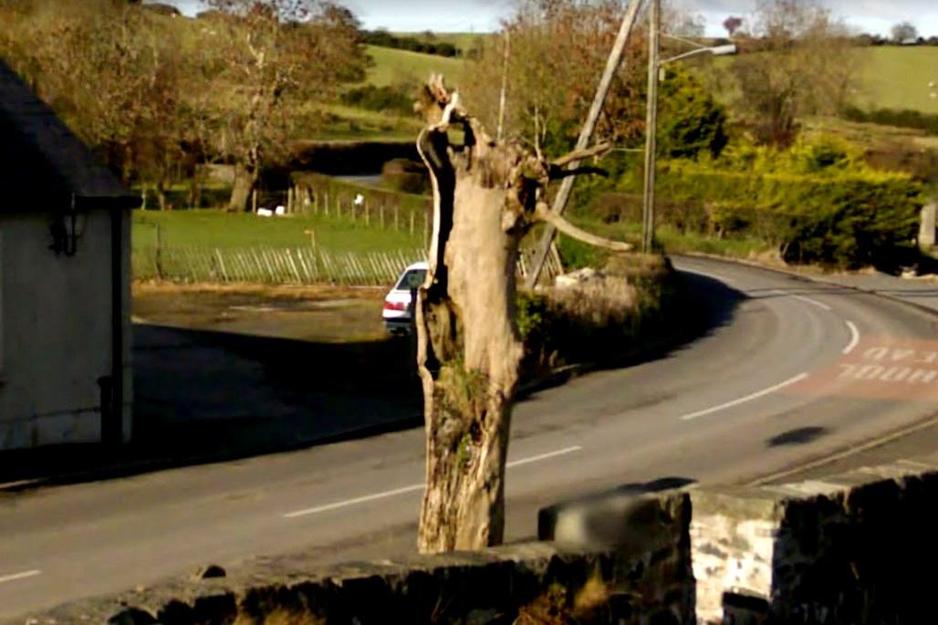 Дерево, которое боялись срубить, так как в нем заточен злой дух