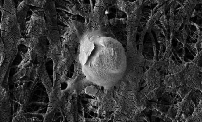 Бактерии, которые обнаружены в Антарктиде под километровым льдом