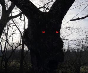 Оно смотрит на меня по ночам — в холодном поту жаловался фермер. Дерево с ослиной головой