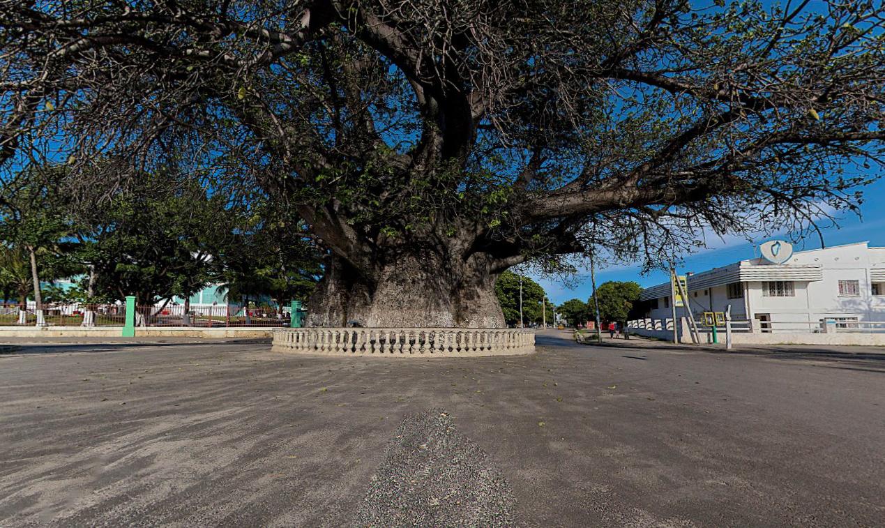 Древние баобабы - Около 2000 лет прожили эти гигантские деревья, а за последние годы начали гибнуть