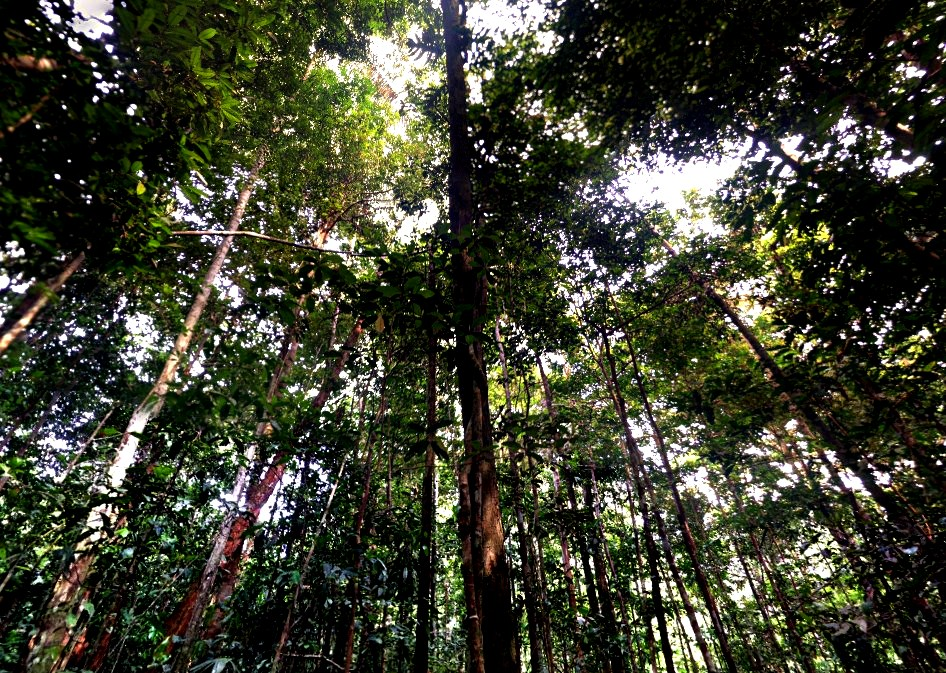 Исчезнут ли тропические леса на нашей планете в течение 100 лет?