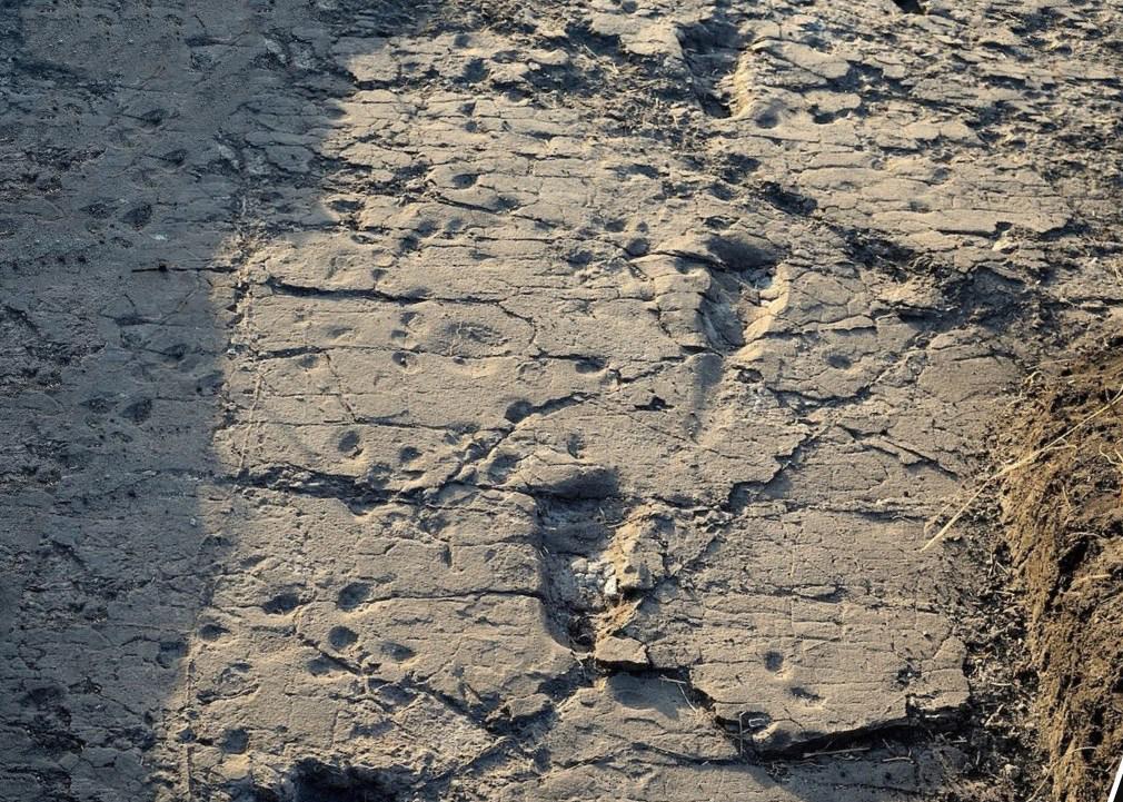Следы австралопитека на камне, оставленные более 3 миллионов лет назад