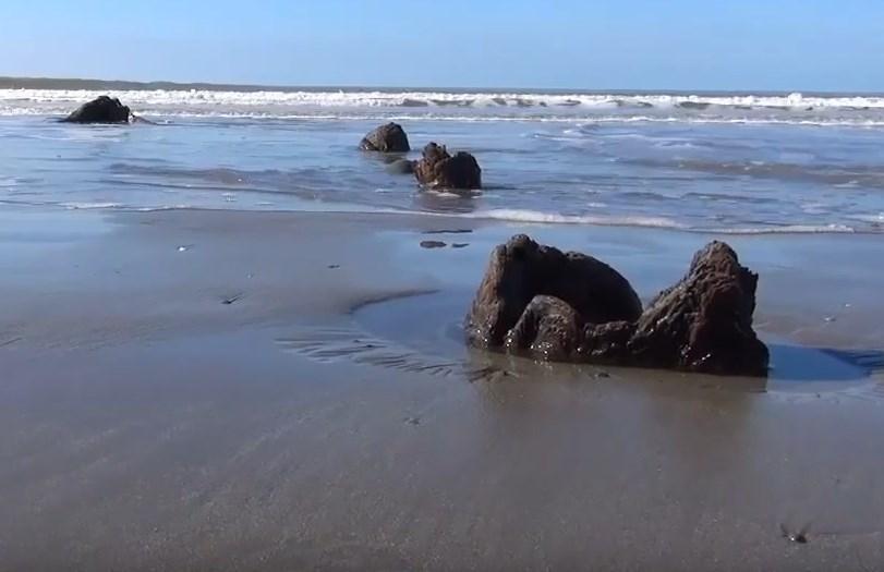 Сюрпризы после шторма: как пляж Уэльса однажды усеяло пнями древних деревьев