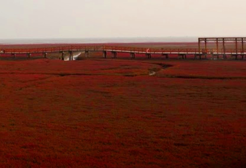Словно кроваво-красный «марсианский» пейзаж в дельте крупной маньчжурской речки Ляохэ
