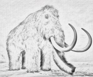 Мамонтов могут попытаться воскресить: изучен геном из Северо-Восточной Сибири и о. Врангеля
