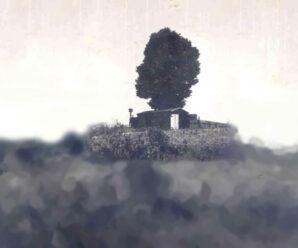 Крона в виде женской головы: мистическая легенда дерева Мэнди
