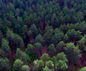 Сколько деревьев нужно посадить, чтобы решить проблему выбросов углекислого газа