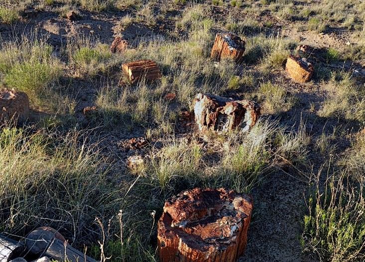 Окаменевший древний лес в пустынных землях Петрифайд-Форест