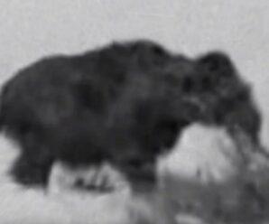 Изучив остров Врангеля, ученые выяснили, что еще 3000 лет назад тут жили мамонты