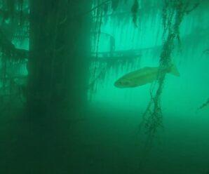 Здесь форель плавает среди деревьев благодаря Кеминскому землетрясению